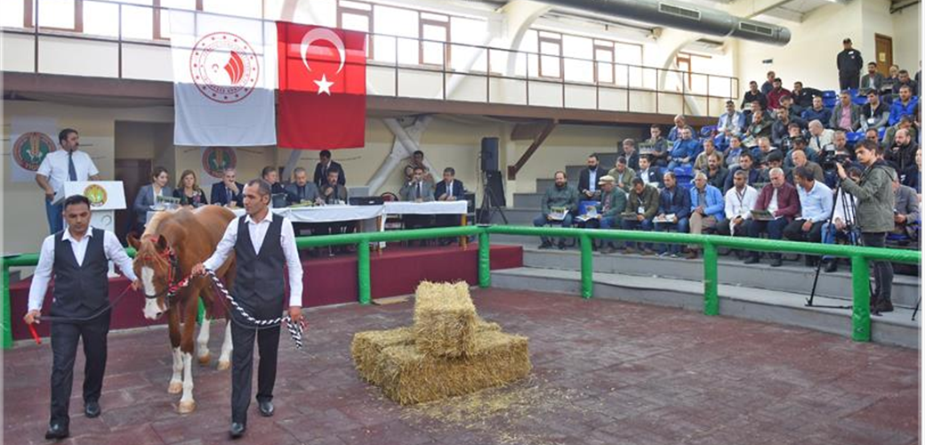 FOAL NAMED 'BOSNA HERSEK' FOUND BUYER FOR 560 THOUSAND TURKISH LIRAS